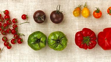 トマト・コレクション
