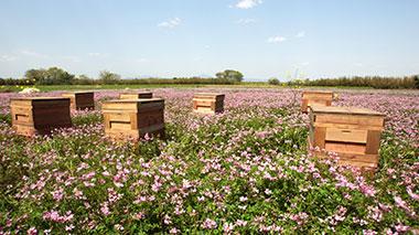 水谷養蜂園
